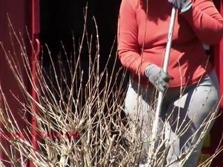 Spring Cleaning PAWG Lisette